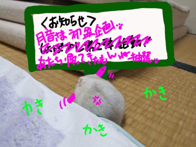 DSCF12277.jpg