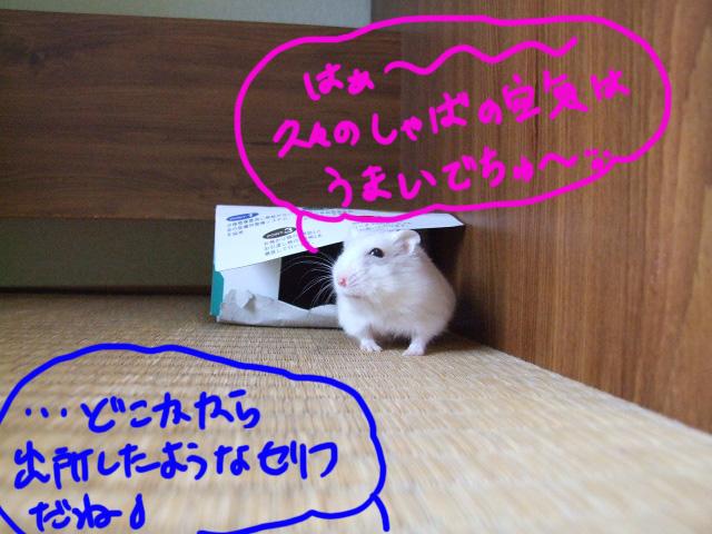 DSCF12868.jpg