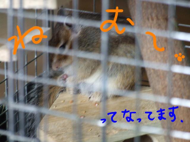 DSCF13883.jpg