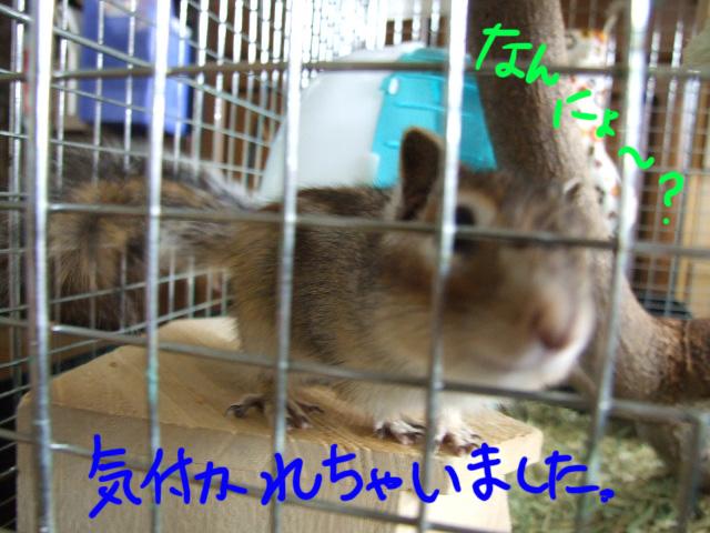 DSCF13897.jpg