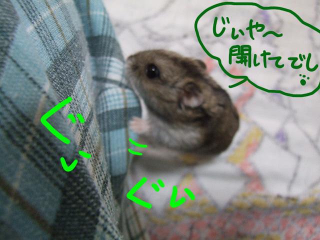 DSCF14138.jpg