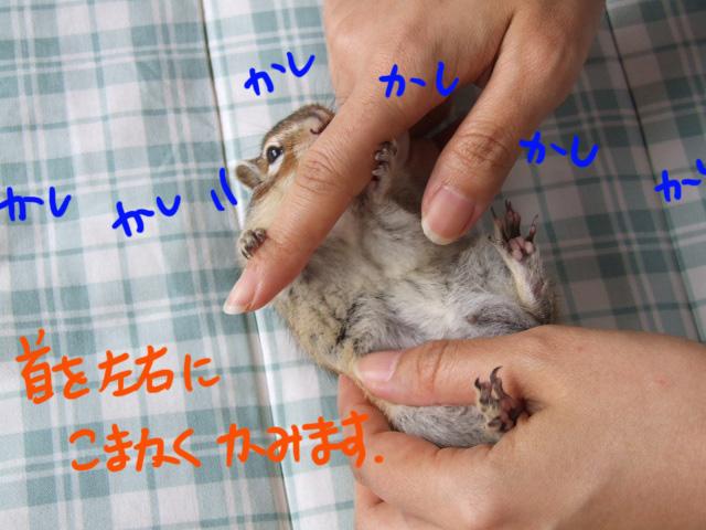 DSCF14541.jpg
