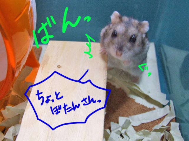 DSCF14959.jpg