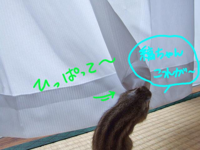 DSCF17207.jpg