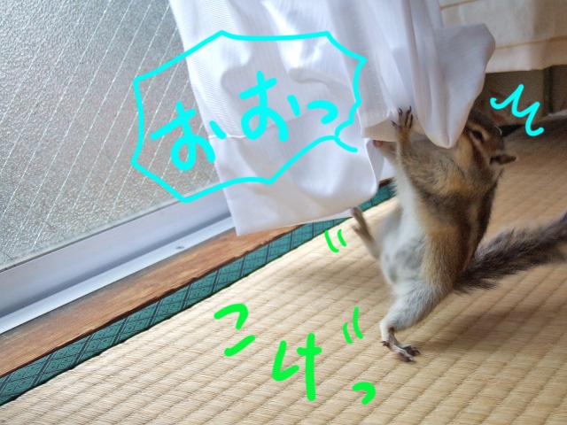 DSCF17209.jpg