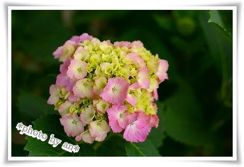 2008・6・01_0552s-s-
