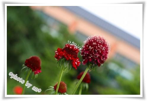 20080604_0999.jpg