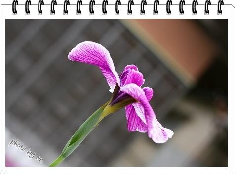 20080621_1842.jpg