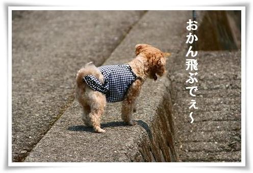IMG_0a230.jpg
