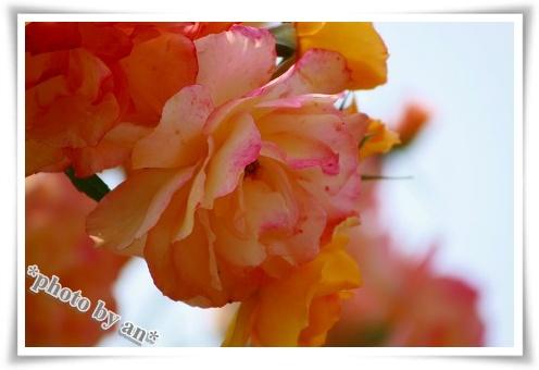 IMG_9487.jpg
