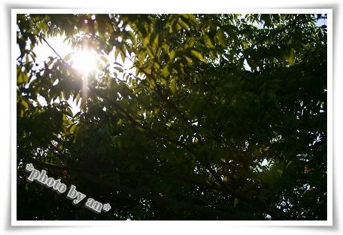 IMG_9722.jpg