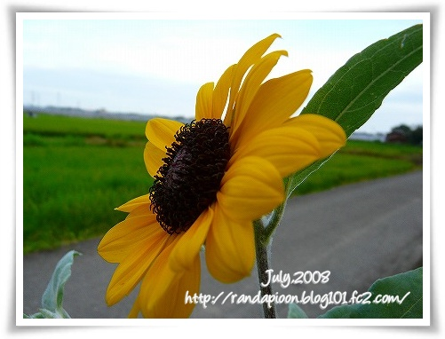 p200871020336.jpg