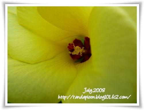 p200871020375.jpg