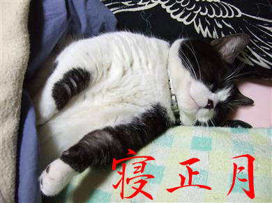 2009_01030078_R.jpg