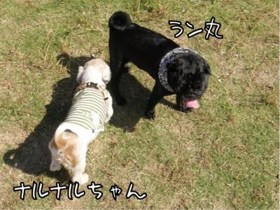 ラン丸とナルナルちゃん5
