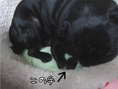 2008.11.11この手6