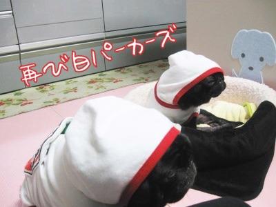 08.11.19.1白ぱか