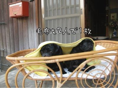 08.12.7.7毛布