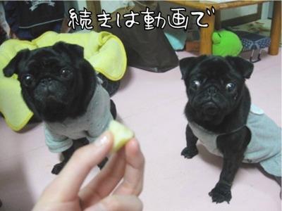 08.12.10.4動画