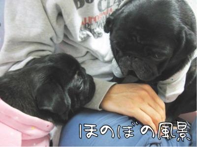 08.12.11.2ほのぼの風景