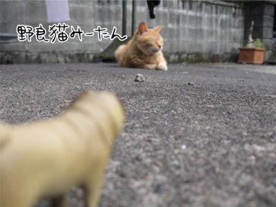 09.5.29.2野良猫みーたん