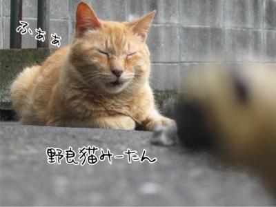 09.5.29.3ふぁぁ