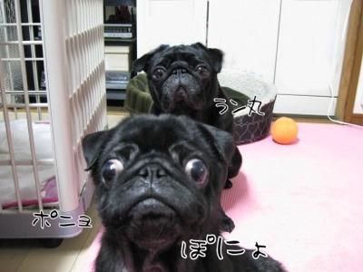 09.6.7.2ぽにょ