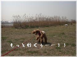 chari3.jpg