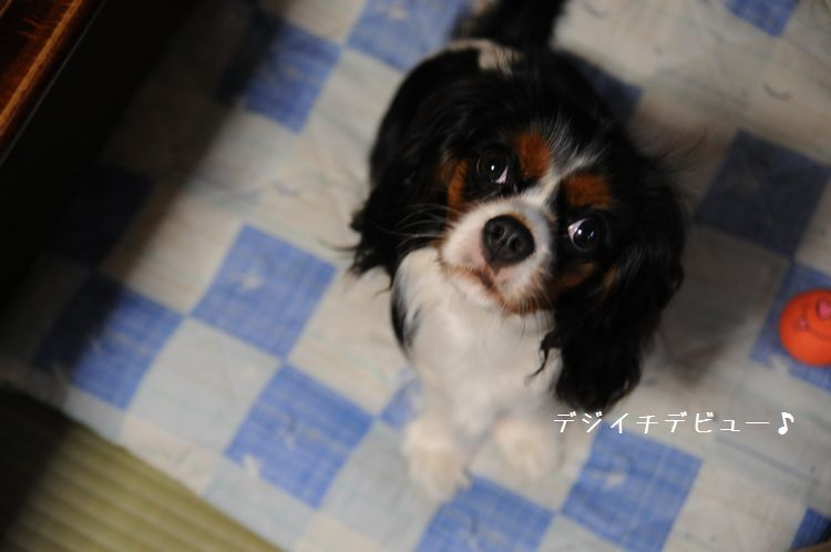 2008春季競技会・江戸川河川敷 018dd