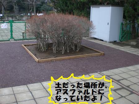 CIMG4655.jpg