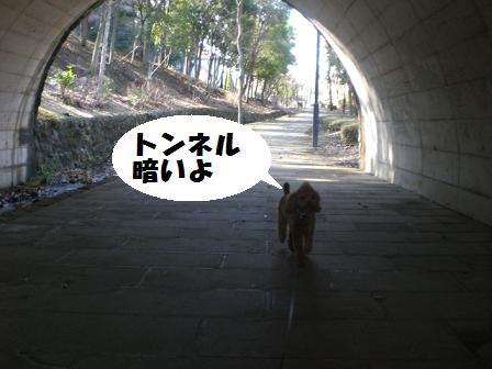 CIMG4856.jpg