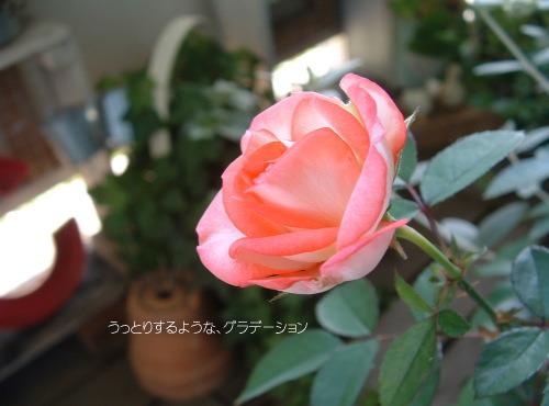 DSC563911.jpg