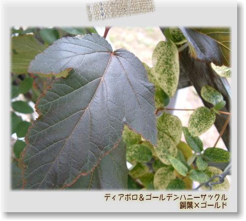 DSC5846111.jpg