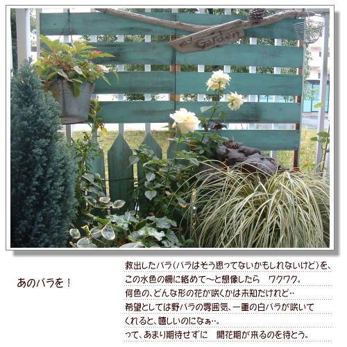 DSC58801.jpg