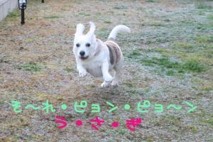 うさぎ飛び