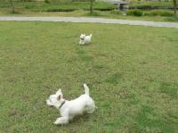 浦安公園 ②
