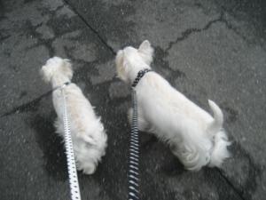 ママ~早くお散歩続けよう~