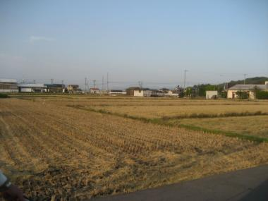 刈り込まれた稲