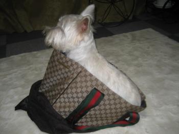あっ これはぼくが大きいンじゃなくってバッグが小さいンだと思う。。