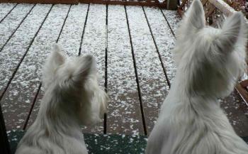 わかったぁミルちゃん? これが雪なんだってぇ