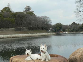 岡山城をバックに♪