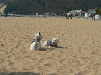 砂浜でレオ・ミル ①