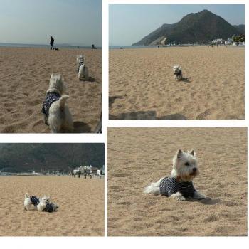 砂浜で ①