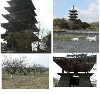 五重の塔 ③