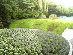 モネ 庭園