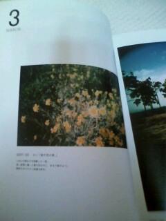 2008626sei.jpg