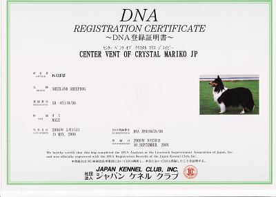 DNAs.jpg