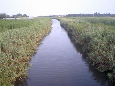 鴨のいる用水路