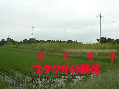 P1230988s.jpg