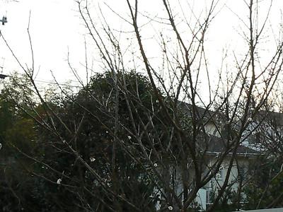 P1280713s.jpg